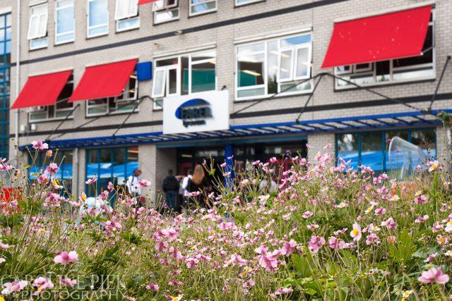 Tuinreportage in Ridderkerk voor Aardoom Hoveniers door Caroline Piek Photography
