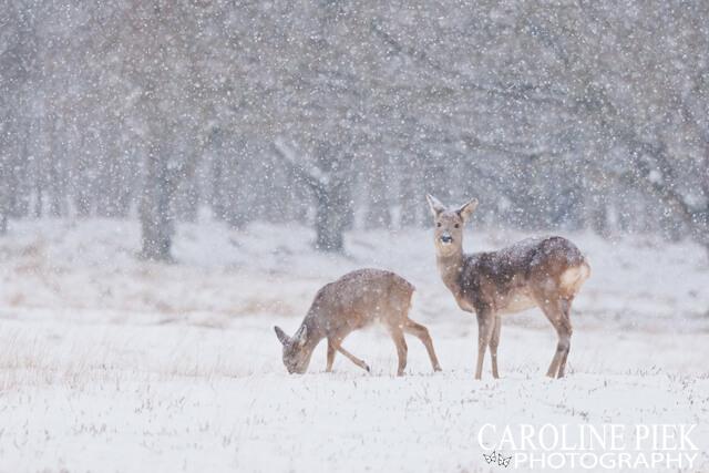 tutorial wildlife fotograferen