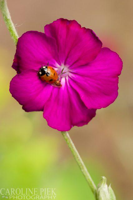 Tuinreportage in Gouda voor Hortivorm door Caroline Piek Photography