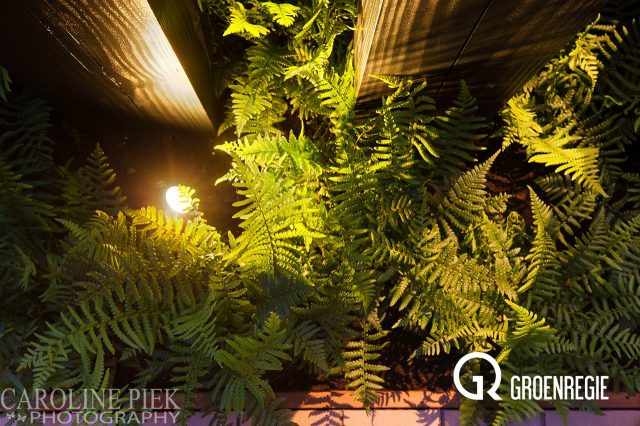 Tuinfotografie in Oudewater voor Groenregie door Caroline Piek Photography