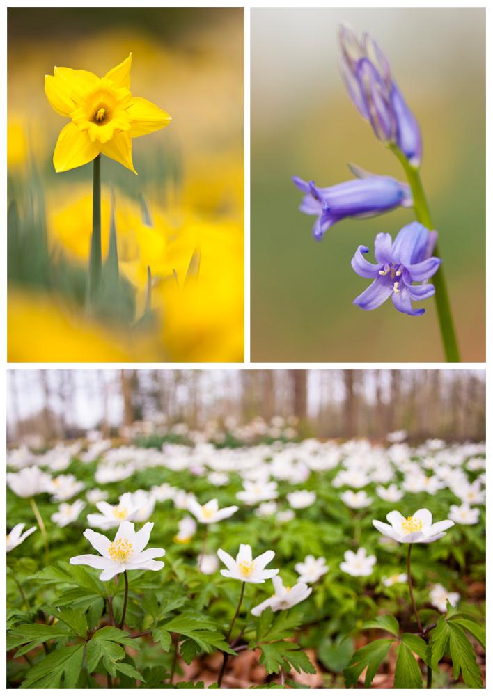 Workshop voorjaarsbloeiers fotograferen