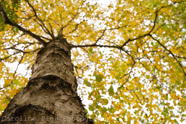 berk in de herfst