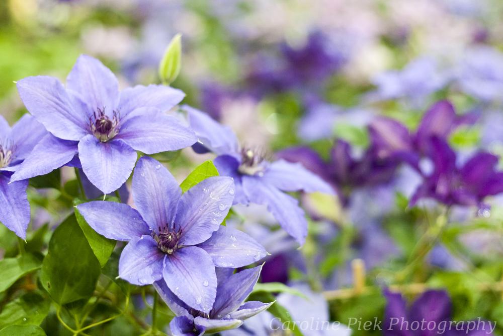 Tuinfotografie op Floraliën Nederland