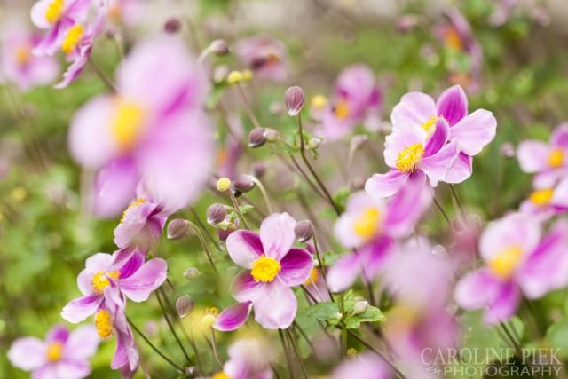 tuinfotografie door professioneel tuinfotograaf