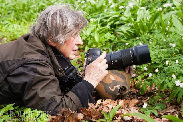 Workshop bosanemonen fotograferen