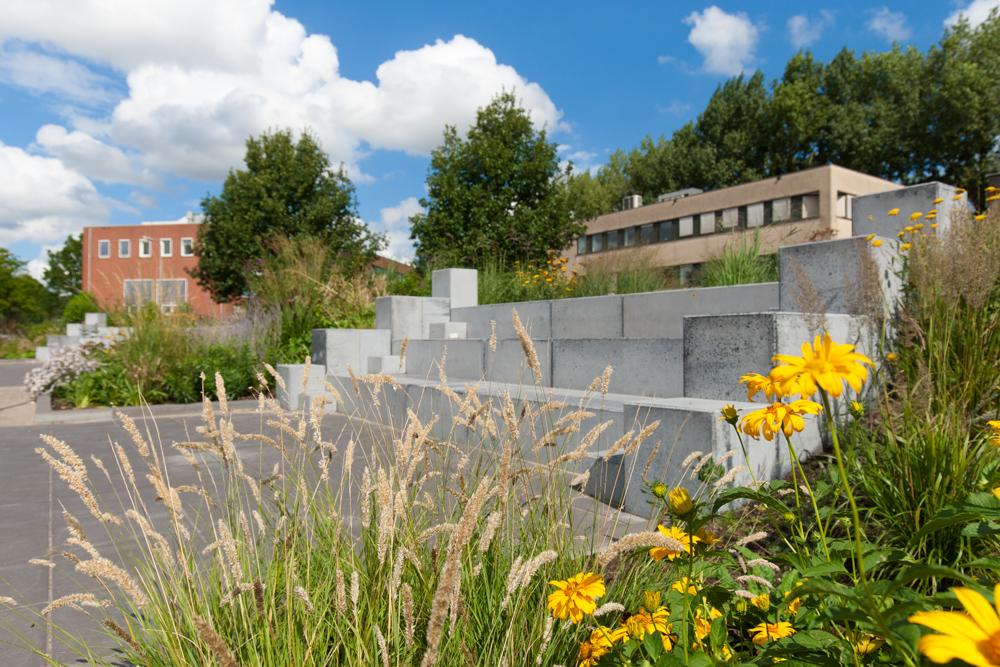 Tuinreportage van groenproject op school voor Aardoom Hoveniers