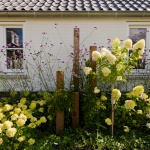 Fotoreportage van tuin in Maarssen voor Groencentrum van Kleinwee
