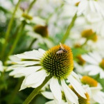 Fotoreportage van tuin in Snelrewaard voor Groenregie