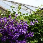 Fotoreportage van tuin in Vleuten voor Groencentrum van Kleinwee