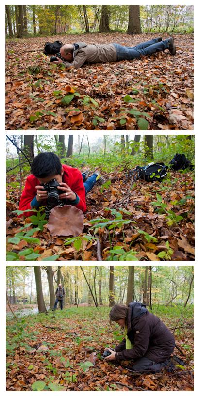 Workshop paddenstoelen fotograferen