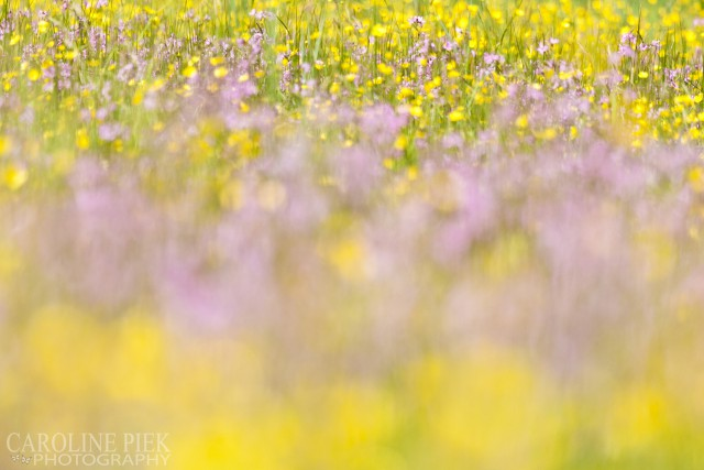 bloemen in heemtuin van IVN Nieuwkoop