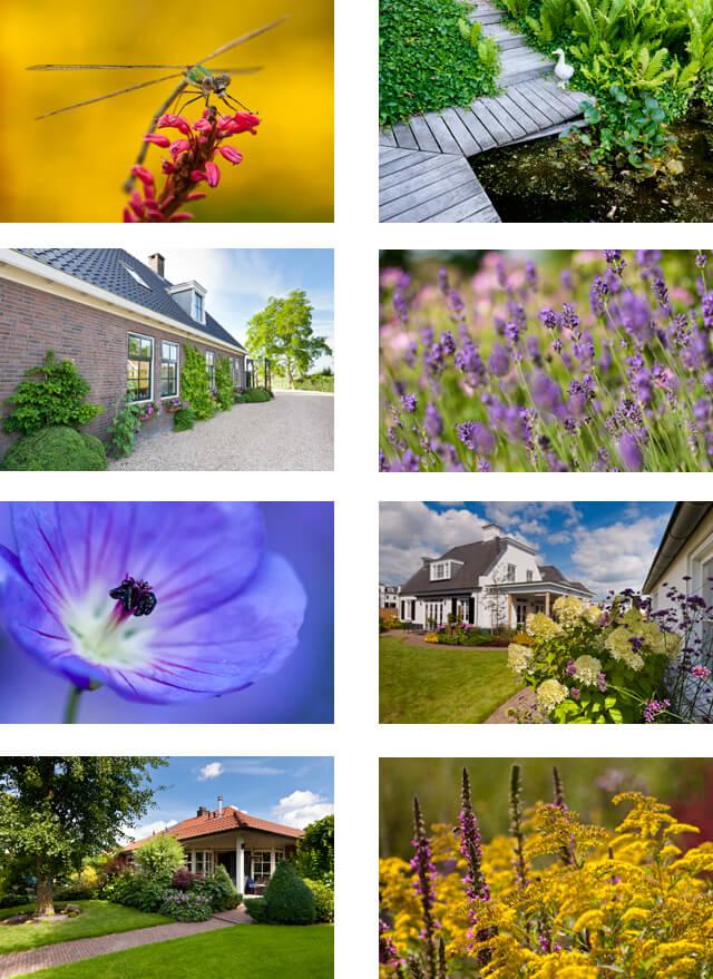 tuinfotografie, tuinfotograaf, heemtuin, tuinreportage, hovenier, tuinontwerper, fotografie, foto's, tuin