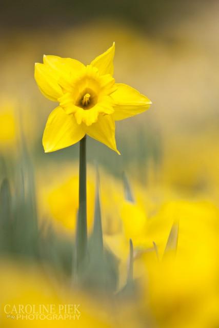 fotoworkshop creatieve bloemenfotografie