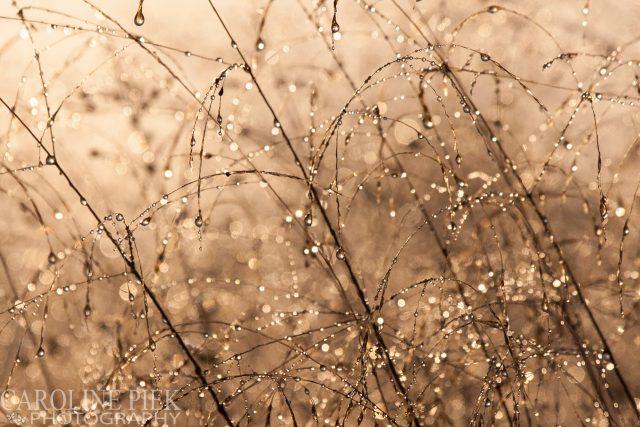 Fotografieworkshop herfst in de vlinderhof