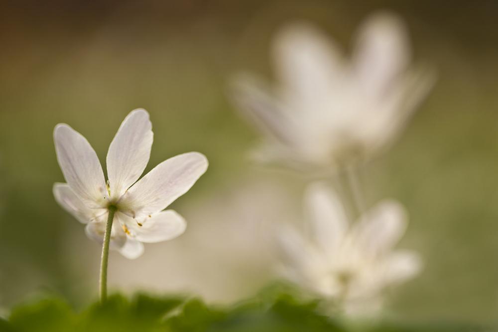 fotografieworkshop in japanse tuin op clingendael