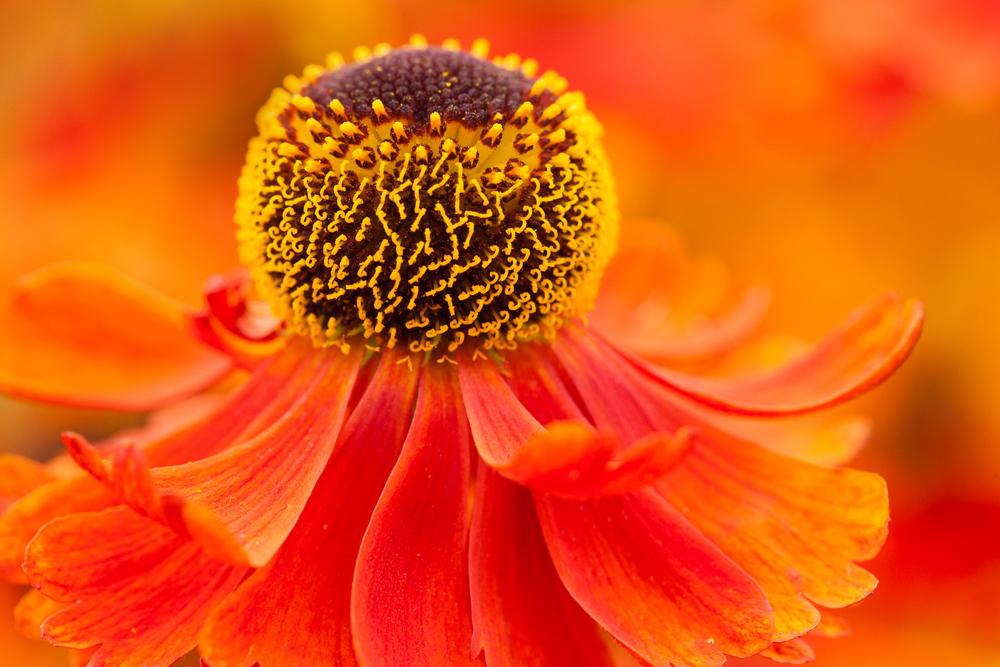 mini workshop tuinfotografie tijdens heerlijk beurs bij plantentuin esveld